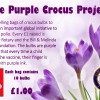Purple Crocus Project